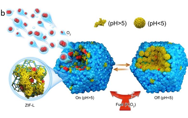 封面文章:快速、可逆pH响应的化学驱动微纳米马达!
