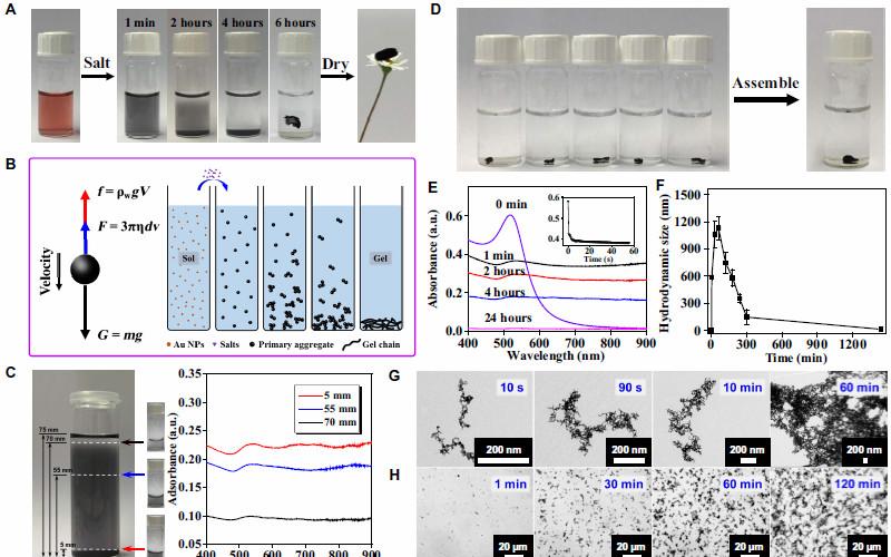 Science Advances:特异性离子效应操控贵金属气凝胶