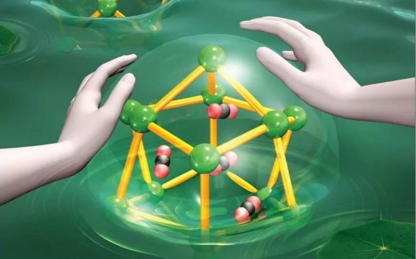 暨南大学JACS封面:模拟肺泡功能的金属有机笼