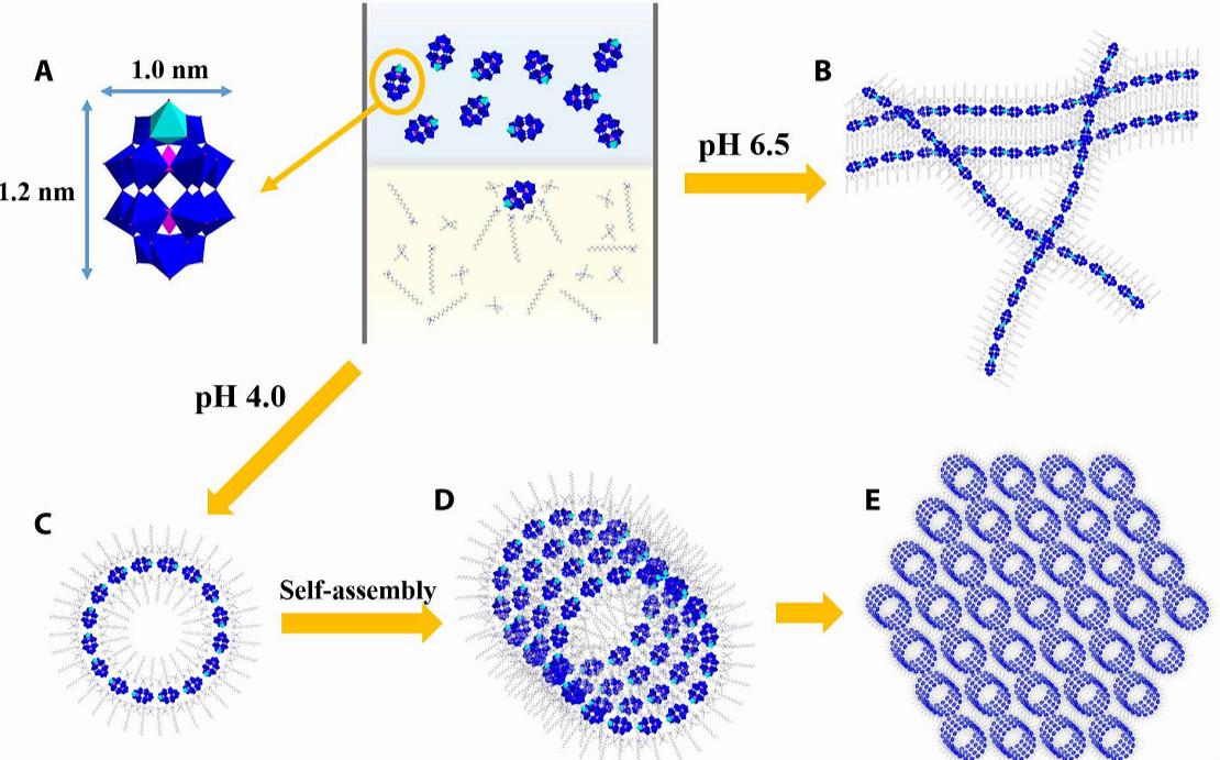 清华大学王训Science Advances:适用于至少15种多酸单团簇的精确自组装策略!