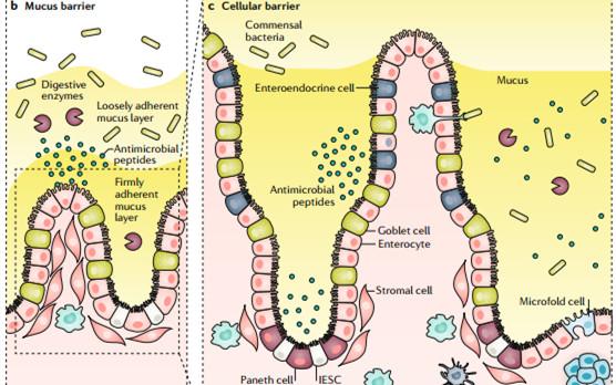 从Nature/Science系列最新成果,看口服药物最新研究趋势