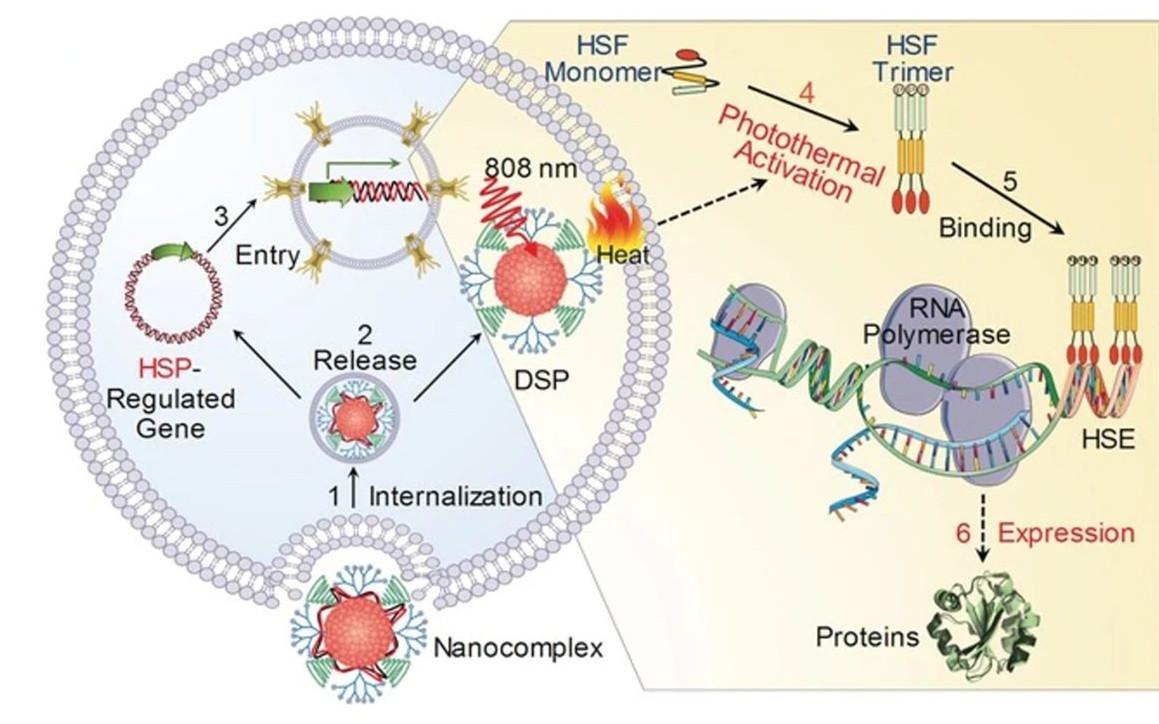 图解综述 | 半导体聚合物纳米材料用作光激活肿瘤药物