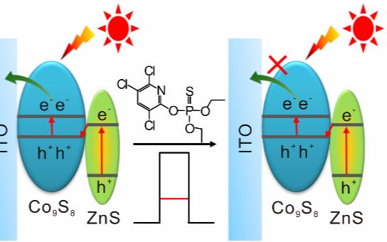 黄行九团队:巧妙设计异质结光电催化剂,超高灵敏度检测有机农残毒死蜱