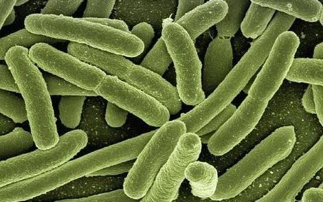 Science子刊首次证明!不只是高血压,高盐饮食还会破坏免疫系统