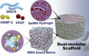 从最新10篇Biomaterials,看水凝胶如何大显神通!