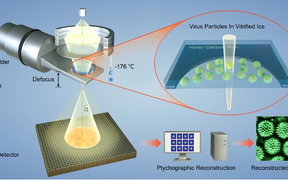 南京大学Nature Commun.:冷冻电镜新技术,低电子剂量生物病毒冷冻电子衍射叠层计算机重构成像