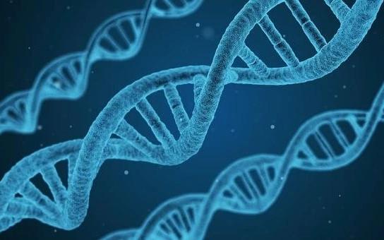 Nature Materials后,再发Angew,国家纳米中心丁宝全/蒋乔等人在DNA器件研究再获进展!